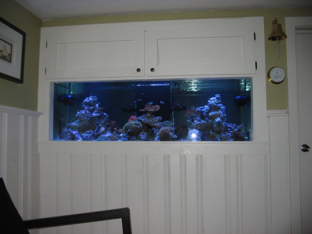 90 Gallon Aquariums Built Into Wall Google Search Fish