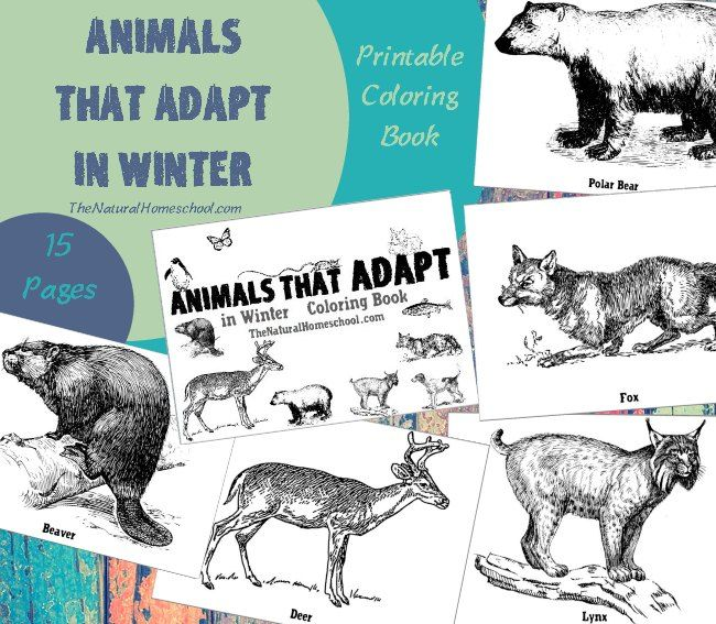 Animals That Adapt In Winter Printable Winter Coloring Pages The Natural Homeschool Winter Books Coloring Books Adaptations