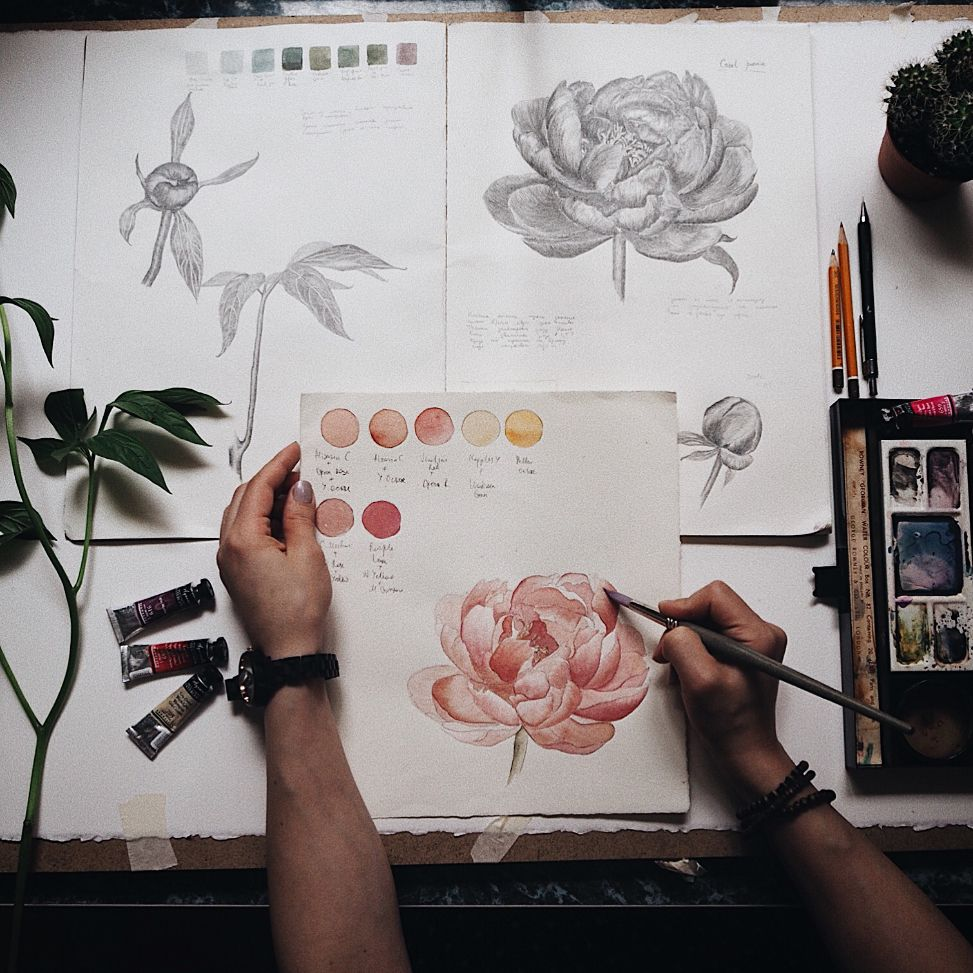 Coral peony study i made a detailed graphic sketch to get a