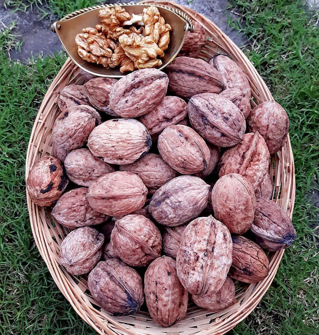 Homegrown Walnuts .... #foodphoto #food #nuts #walnuts #abbottabad #home #pakistan #organic #omega3 #nutrition #instagram #photography #instaphoto #foodphotography #cozy #healthyeating #fallinlove #healthyfood #health #healthylifestyle #ketolife #organicfood #walnutsnutrition Homegrown Walnuts .... #foodphoto #food #nuts #walnuts #abbottabad #home #pakistan #organic #omega3 #nutrition #instagram #photography #instaphoto #foodphotography #cozy #healthyeating #fallinlove #healthyfood #health #heal #walnutsnutrition