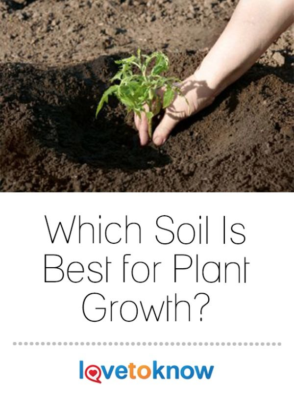 Why Loamy Soil Is Considered Ideal For Gardening
