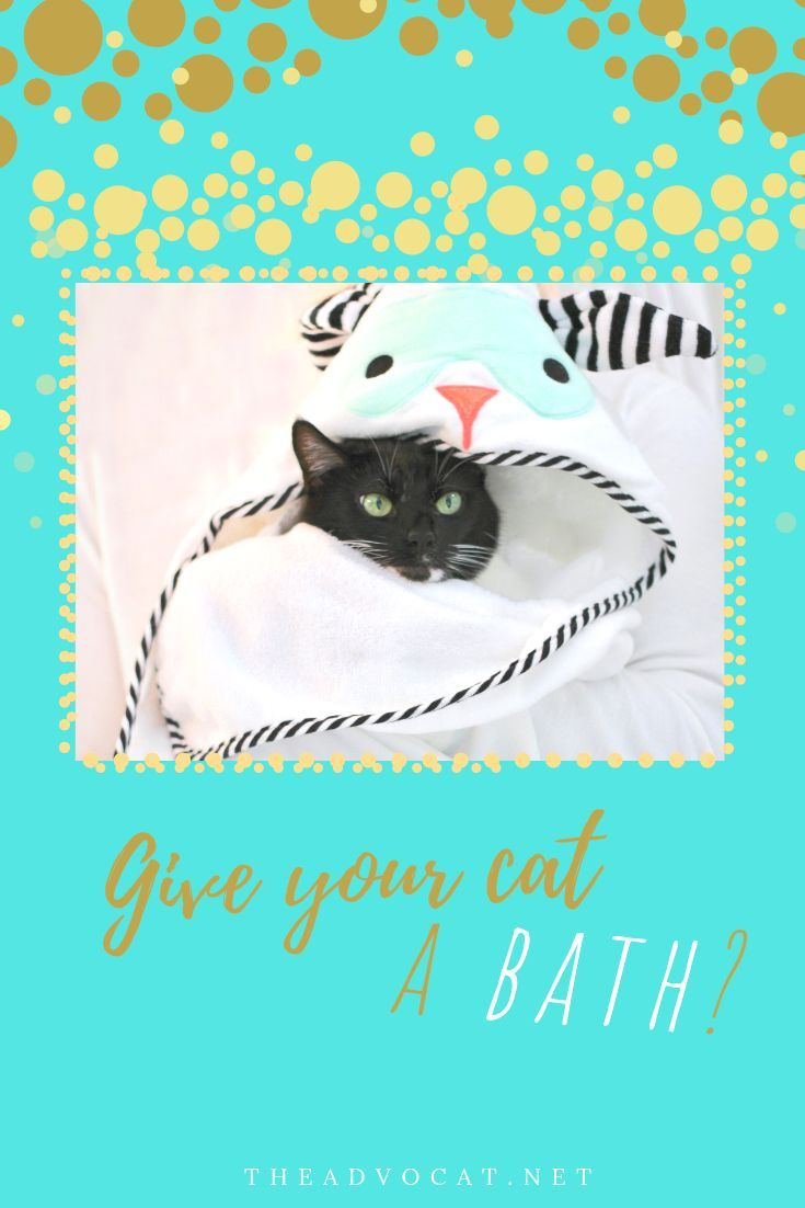 Give your cat a bath funny cat videos cat care cats