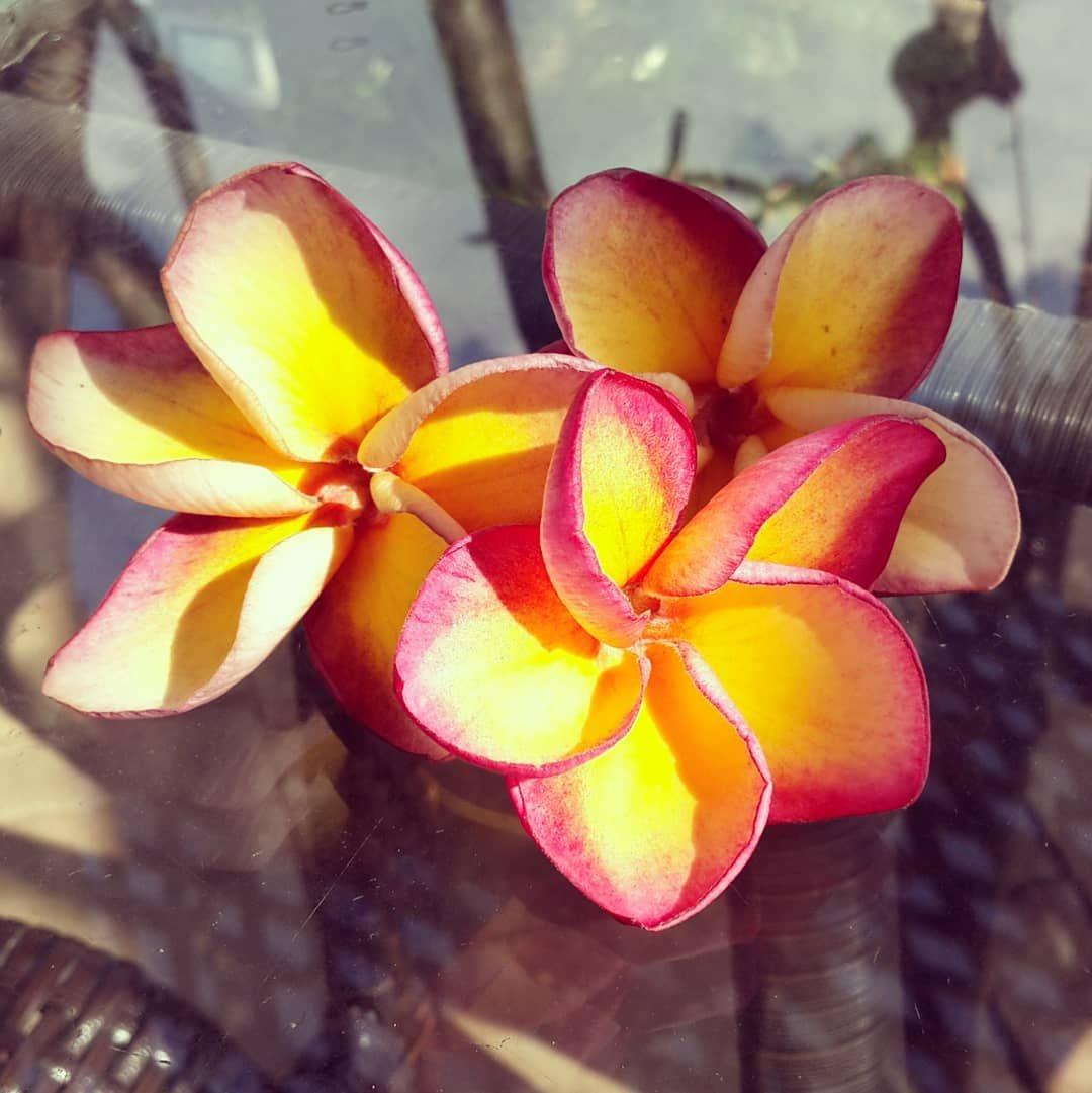 Название доставки цветов — photo 2
