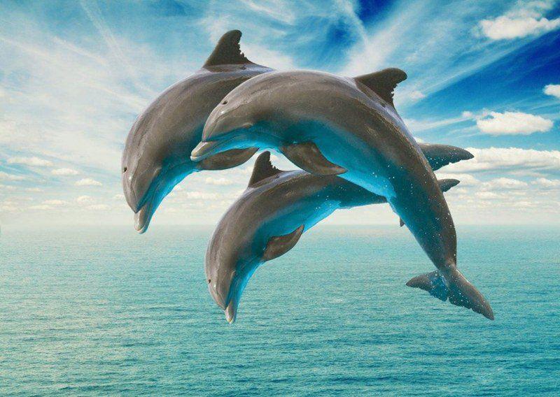olphins exhibit human communication patterns