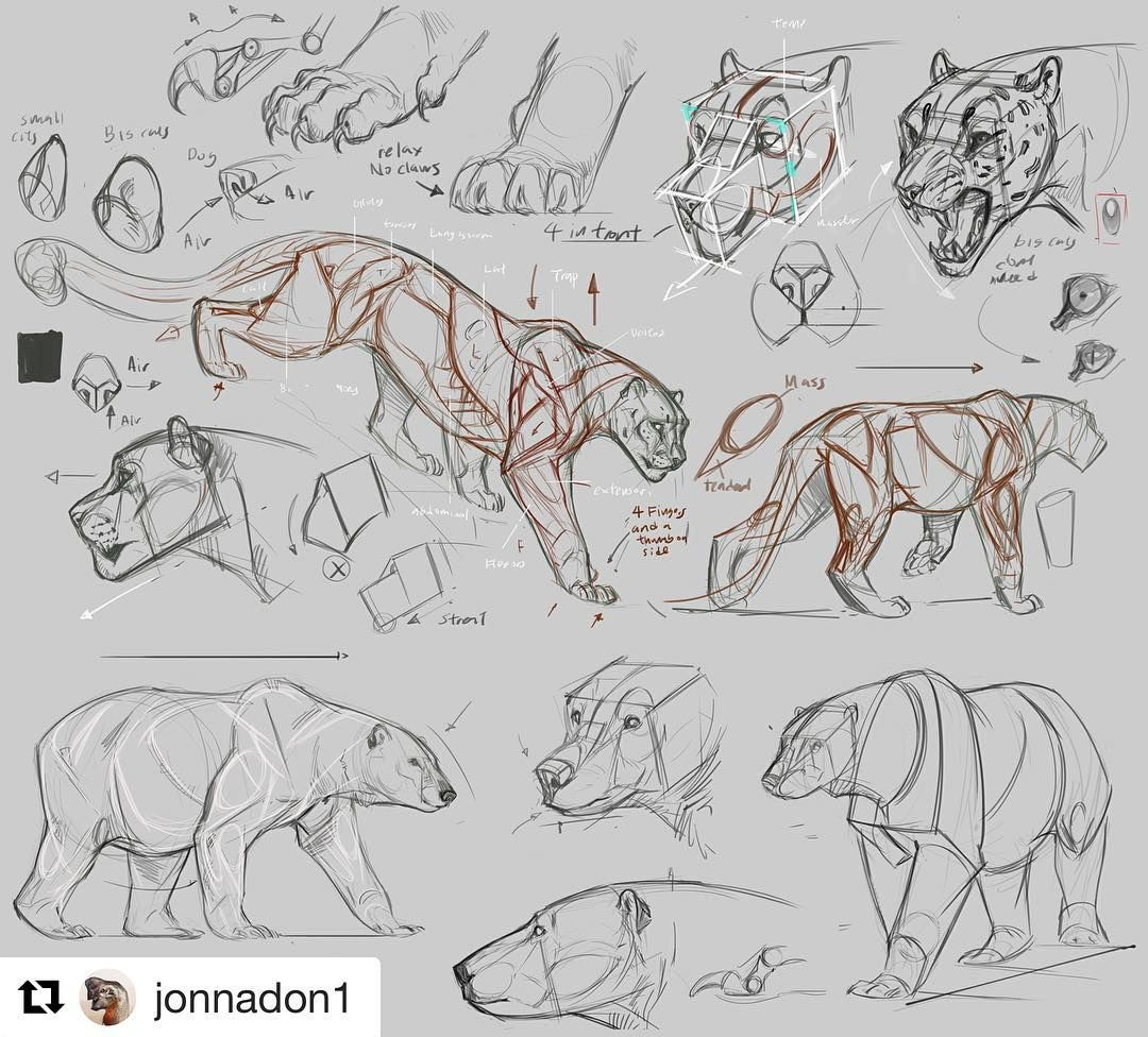 Leopard, lion, polar bear   Drawing Animals   Pinterest   Polar bear ...