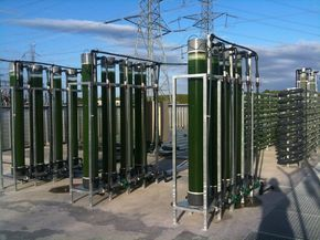 microalgas biomasa