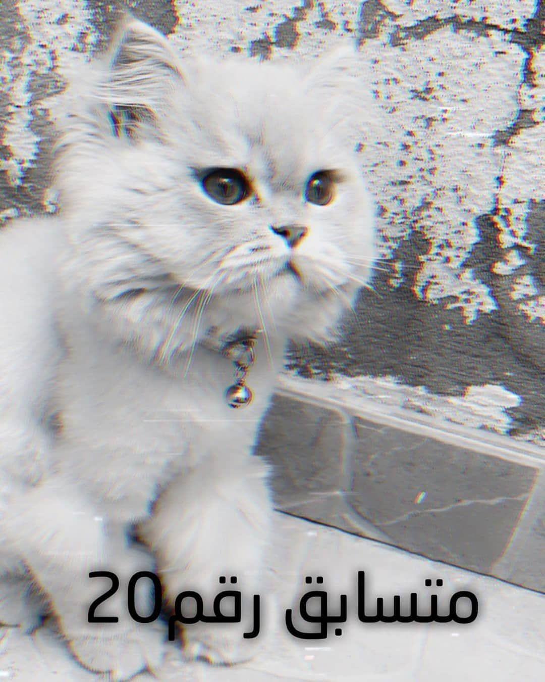 متسابق رقم في مسابقه بيوتي بتس لاجمل حيوان اليف قطط قط قطه بسس بس بسه حيوانات اليفه طيور ببغاء اسماك زينه Cats Animals Pets Cats
