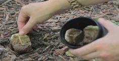 Se anche tu sei tra quelle persone che, una volta creato l'infuso del tè, butti via la bustina, devi assolutamente leggere questo articolo. Devi sapere infatti che l'uso delle bustine del tè continua anche dopo che ne hai assaporato l'infuso.Il tè, dopo il caffè, è probabilmente la bevanda più di...