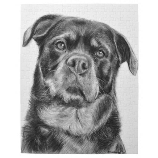 Rottweiler Drawing Jigsaw Puzzle Zazzle Co Uk Dog Art