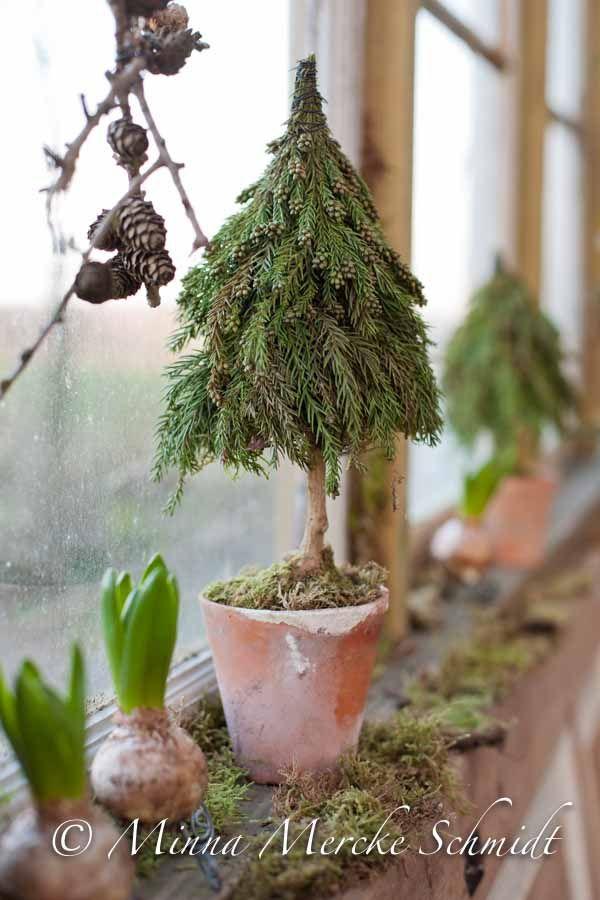 tannenbaum im topf weihnachten pinterest. Black Bedroom Furniture Sets. Home Design Ideas