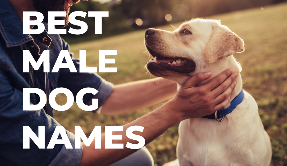 Every Dog Has Unique Traits Especially Colors That Help Set Them Apart And Can Make Finding The Perfect Name Chal Dog Names Best Male Dog Names Dog Names Male