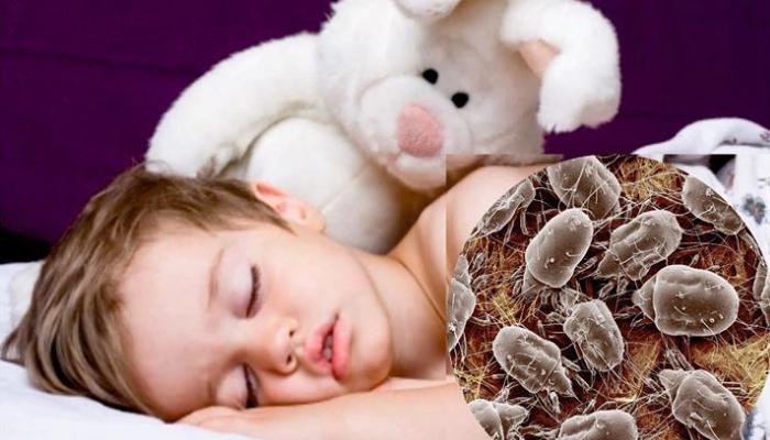 Como Acabar Con Los Acaros De La Cama Alerta Desinfectar Tu Colchon Es Primordial Para Tu Salud