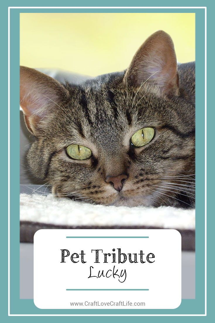 Pet Tribute Lucky Comfort Connects in 2020 Cat loss