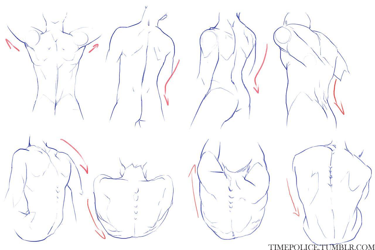 The Art Resource | anatomy (movement) | Pinterest | Anatomía ...