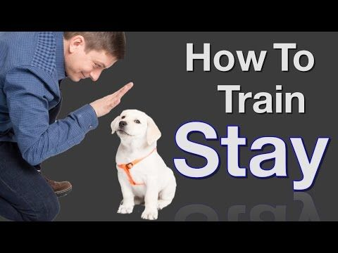 How To Teach Your Dog To Stay In 3 Steps Force Free Youtube