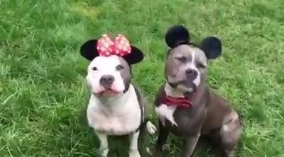 So jealous of Mickey and Minnie's relationship https://www.facebook.com/clubedopitbullmanaus/videos/504936919686226/?pnref=story