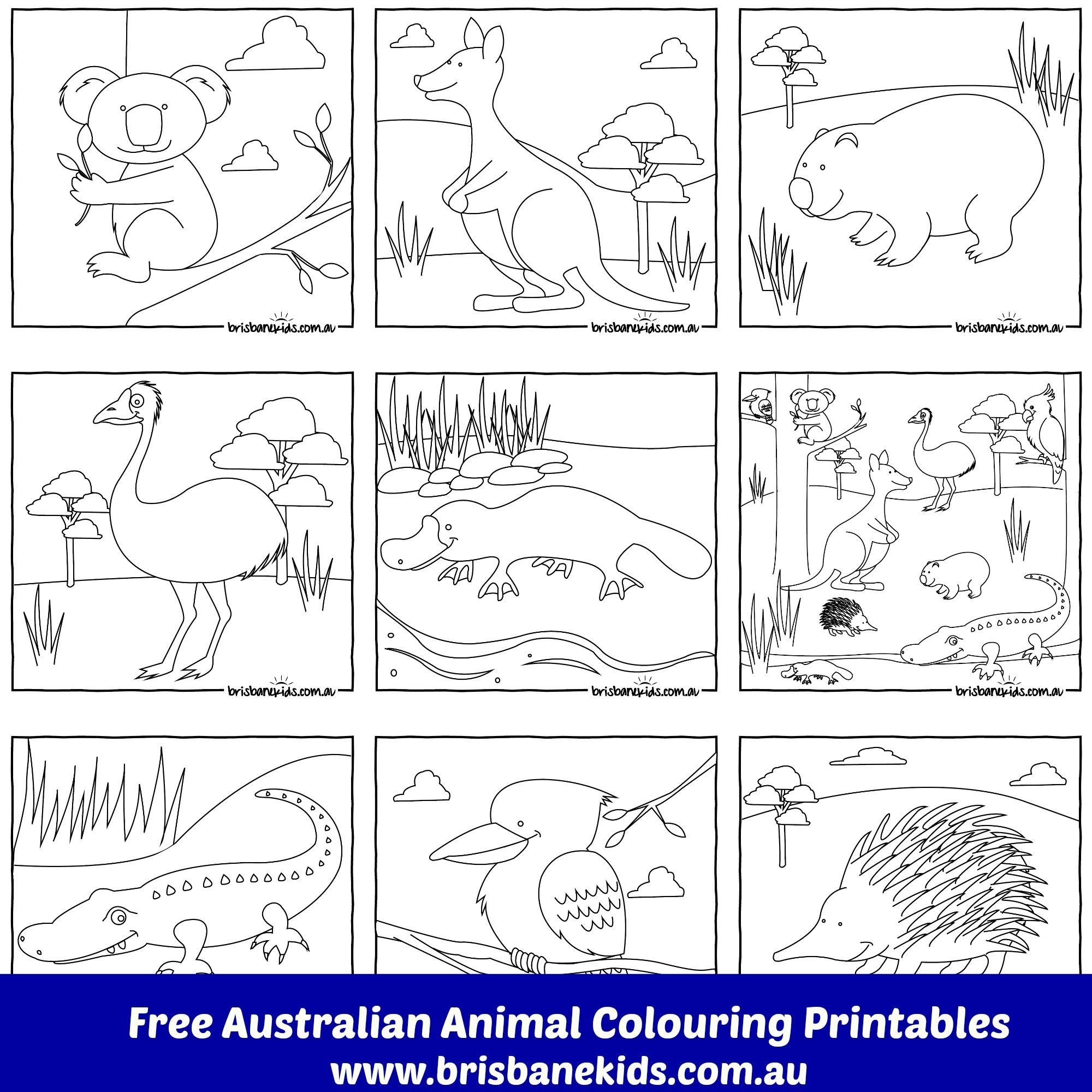 Free Printable Colouring In Australian Animals Brisbanekidsau