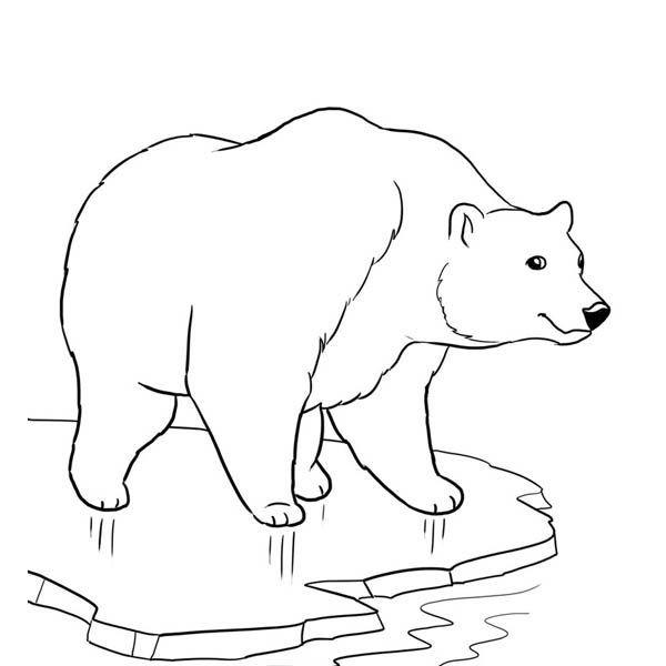 أجمل رسومات دب للتلوين جاهزة للطباعة بفبوف Polar Bear Coloring Page Bear Coloring Pages Polar Bear Color