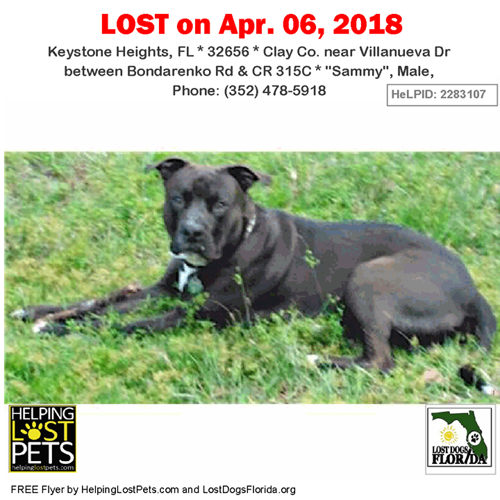 Have You Seen This Lost Dog Lostdog Sammy Keystoneheights