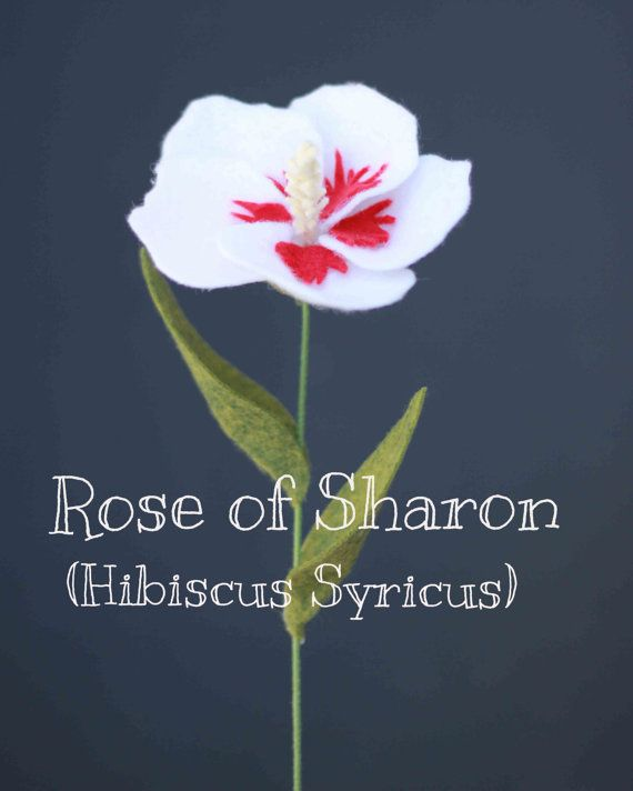 Felt Rose of Sharon (Hibiscus Syriacus) - Build Your Own Bouquet ...