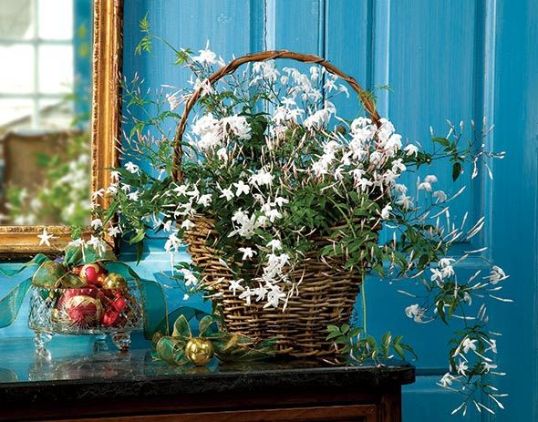 Jasmine in a Grapevine Basket, $65 each