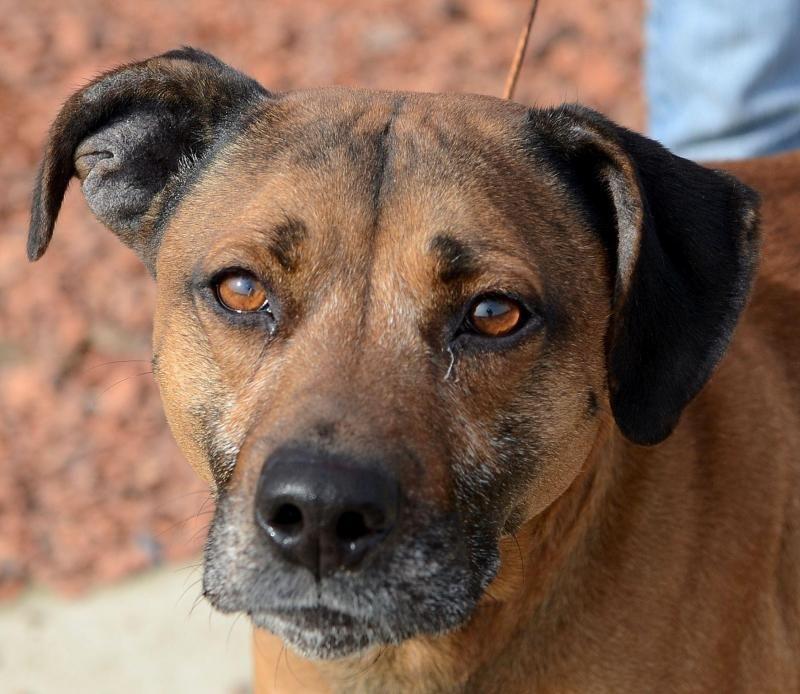14+ Athens clarke county animal shelter ideas