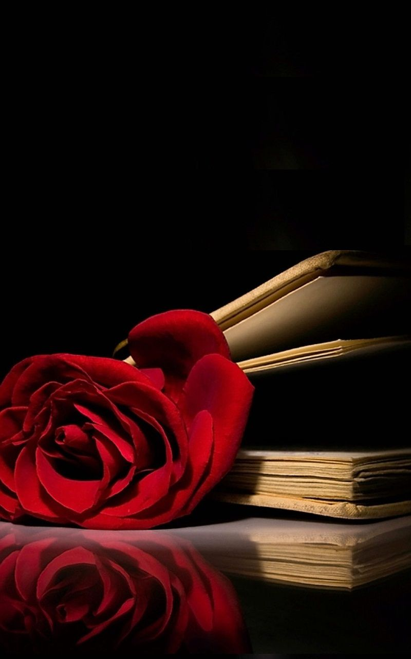 Red Rose Book Wallpaper Iphone Best Iphone Wallpaper Book Wallpaper Red Roses Wallpaper Iphone Wallpaper