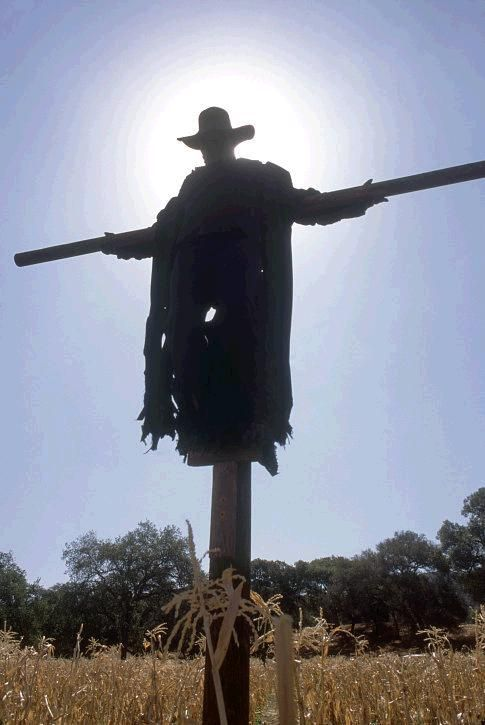 Jeepers Creepers 3 Finally Happening With Images Halloween