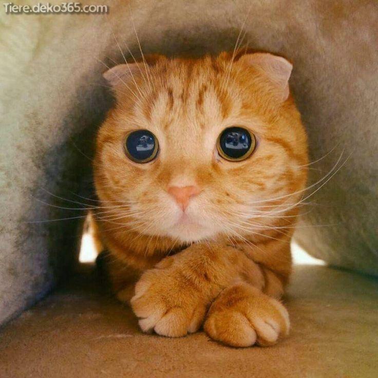 Lustige Katzen und Kätzchen in 2020 Lustige katzen
