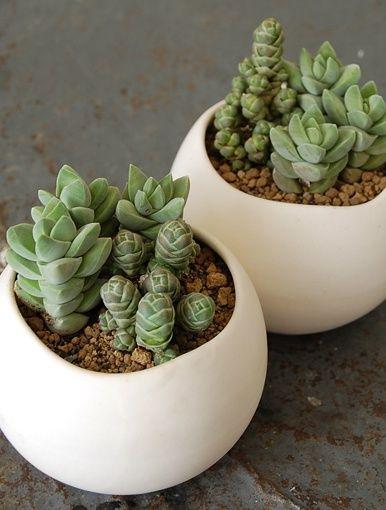 Plants in white pots.