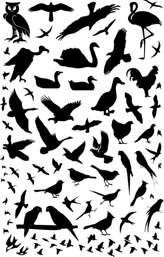 Silhouette Collection Of Bird Animals Vinyl Wall Decals Kids Home