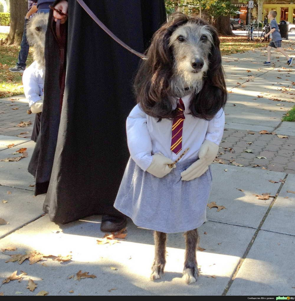 Pin On Large Dog Halloween Costumes