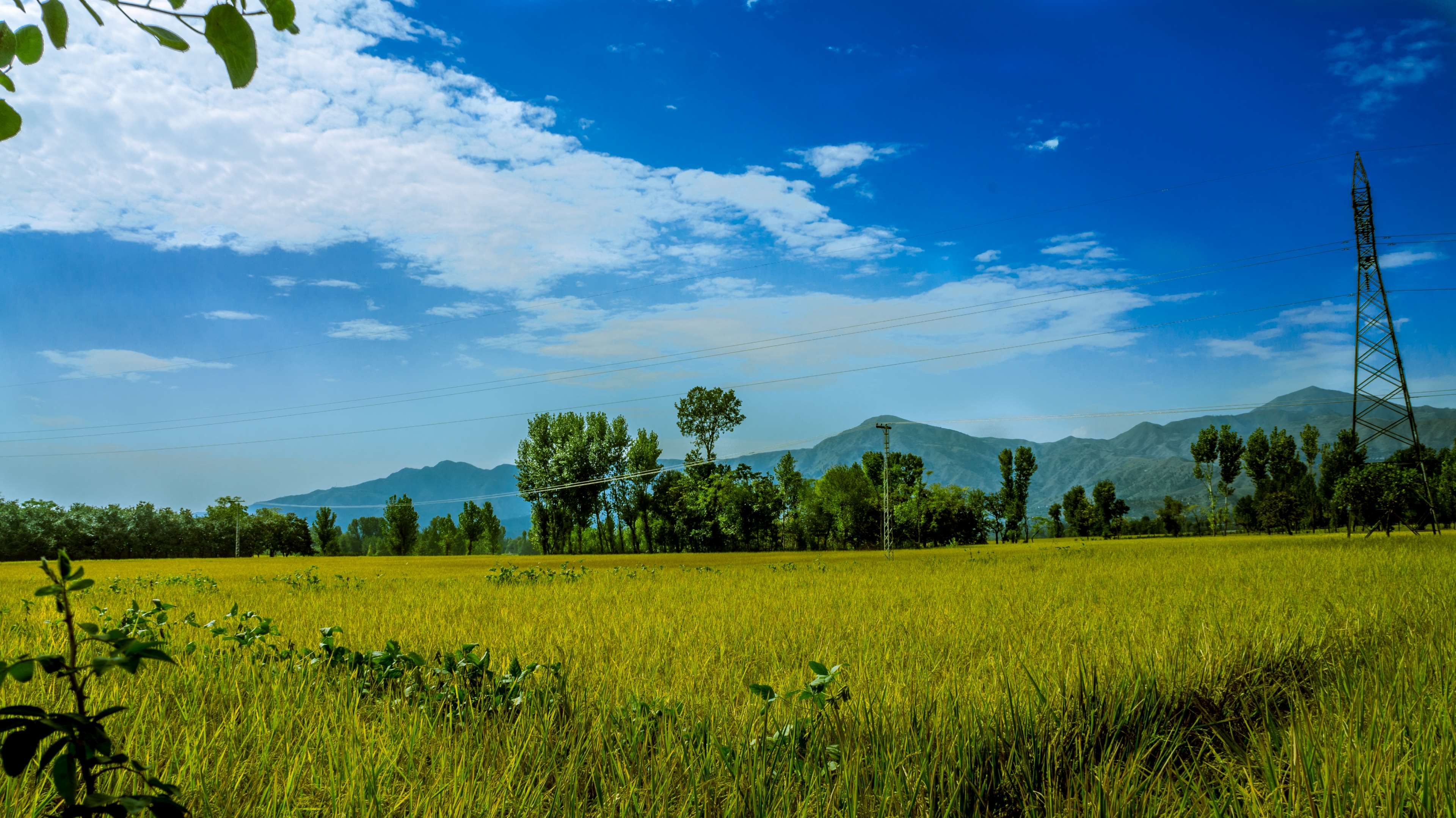 Agriculture Blue Sky Countryside Crop Cropland Farm Farmland Field Grass Landscape Nature Outdoors Pasture Rural Landscape Cropland Summer Trees