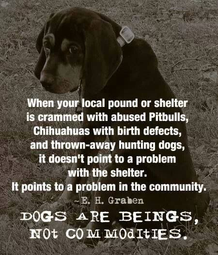 Dogs Are Beings....