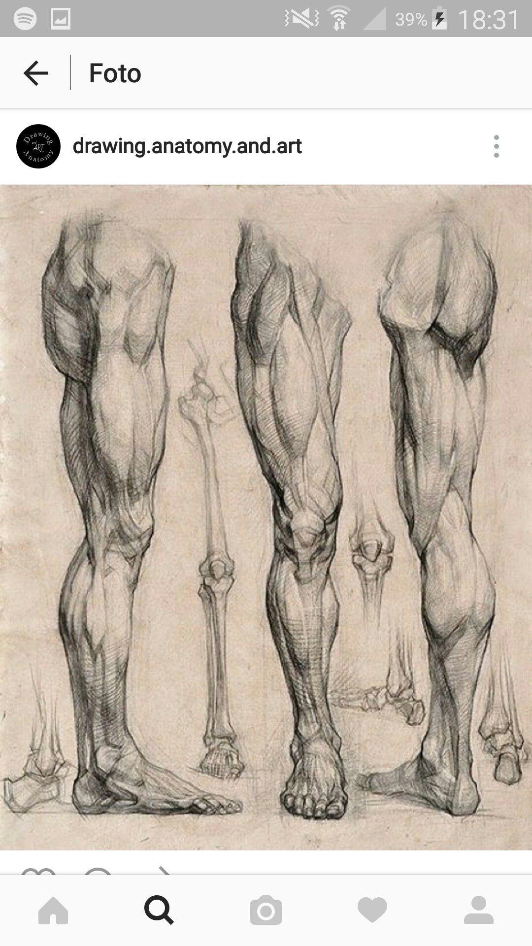 Pin von Angelica Bettoni auf Anatomia | Pinterest
