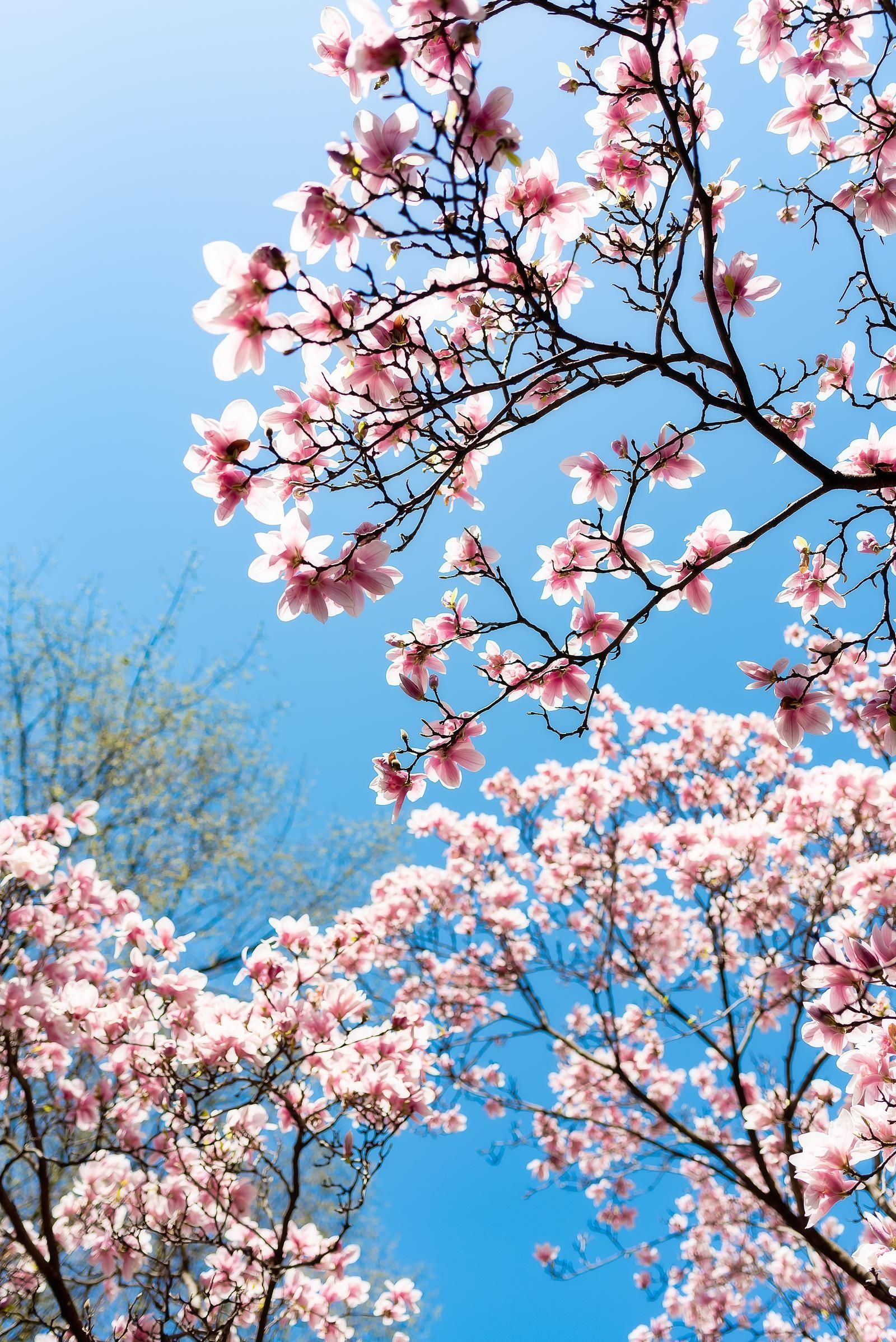 20 Ways I M Embracing Spring Sed Bona Spring Aesthetic Spring Strolls Beautiful Flowers Wallpapers
