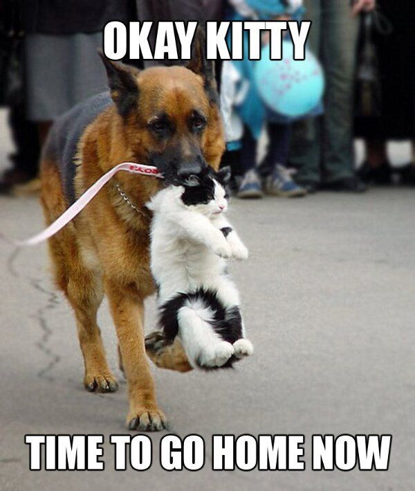 Ok Kitty... time to go home now.. (lol)