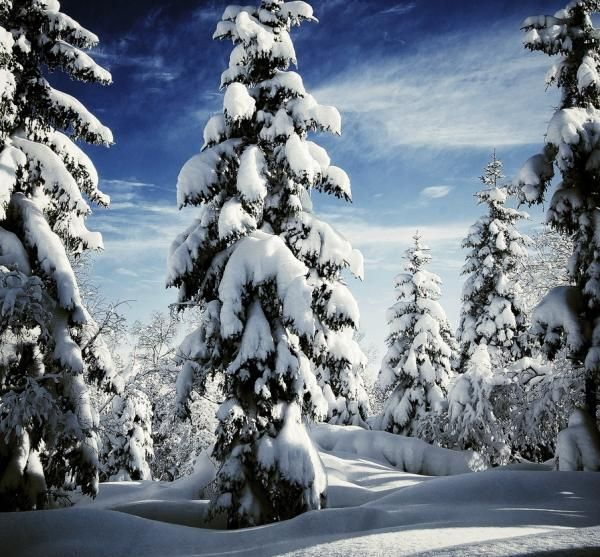 Pictures Of Trees To Make You Love Nature More Winter Landscape Photography Winter Landscape Winter Scenery