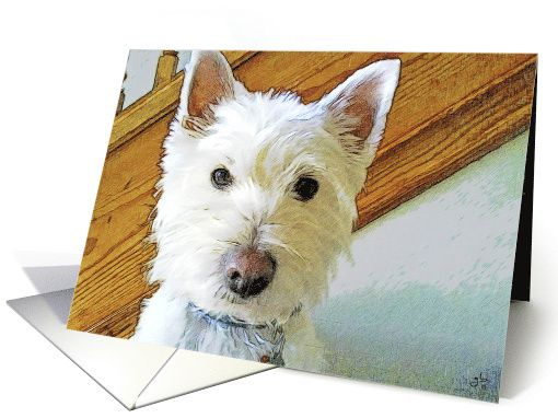 Westie Dog Is Looking At You Best Happy Birthday Ever Card Westie