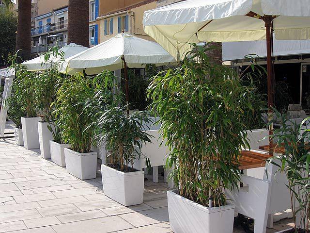 Bambus im Kübel kann eine Terrasse im Garten oder einen Balkon mit ...