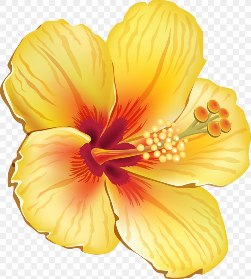 Tropical Flower Drawing Google Search In 2020 Cartoon Flowers Flower Clipart Hawaiian Flowers