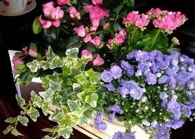 Tipos de plantas según su duración | EROSKI CONSUMER. Las plantas se clasifican, según la duración de su ciclo vital, en tres grandes grupos: anuales, bianuales y perennes