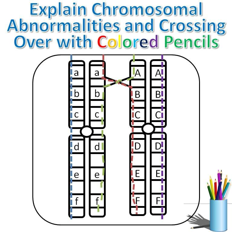 Explain Chromosomal Abnormalities And Crossing Over For