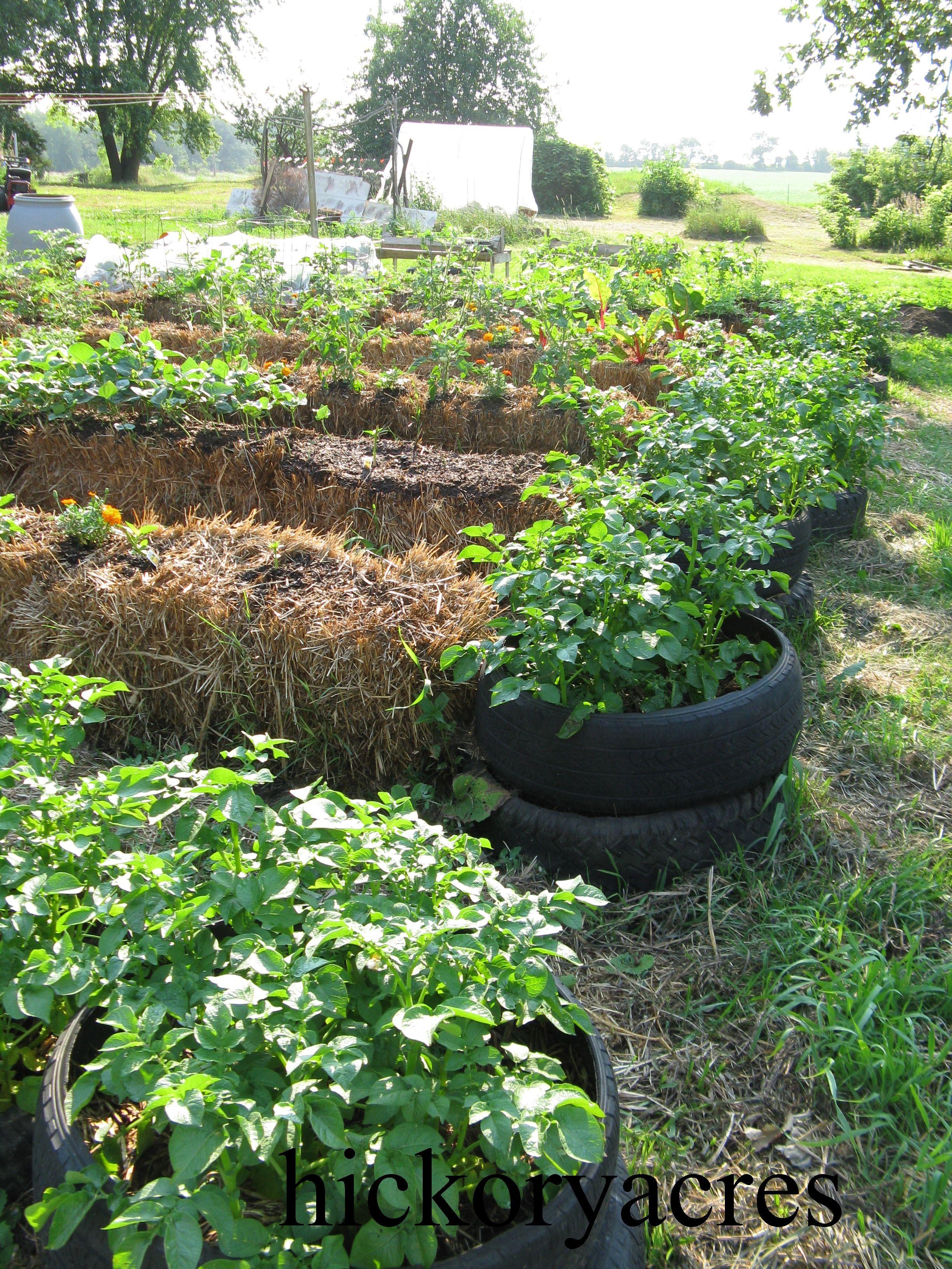 Pin By Delanie Tiakia On Hay Bale Gardening Growing Vegetables Straw Bale Gardening Growing Food