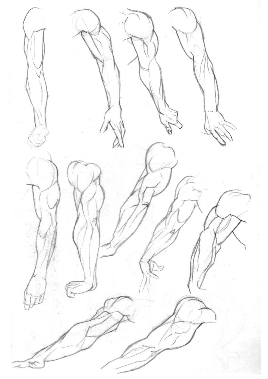 Sketchbook: Arms p. 2 animation - draw anatomy pose gestures ...