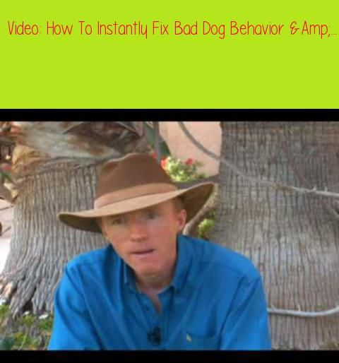 How To Instantly Fix Bad Dog Behavior Amp Aggression Don