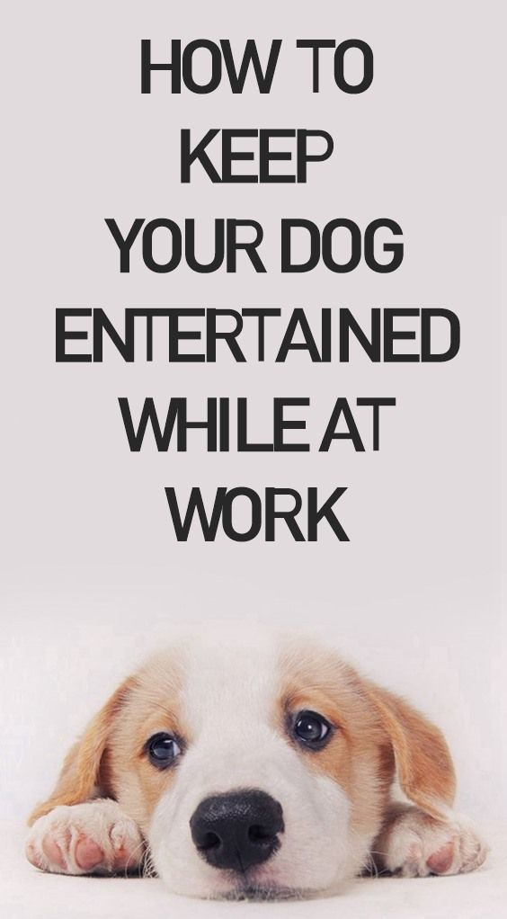 Interactive Dog Toys 10 Ways To Keep Your Dog Entertained While At Work