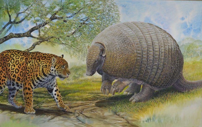 Giant Pampathere, Jaguar | Prehistoric animals, Extinct ...