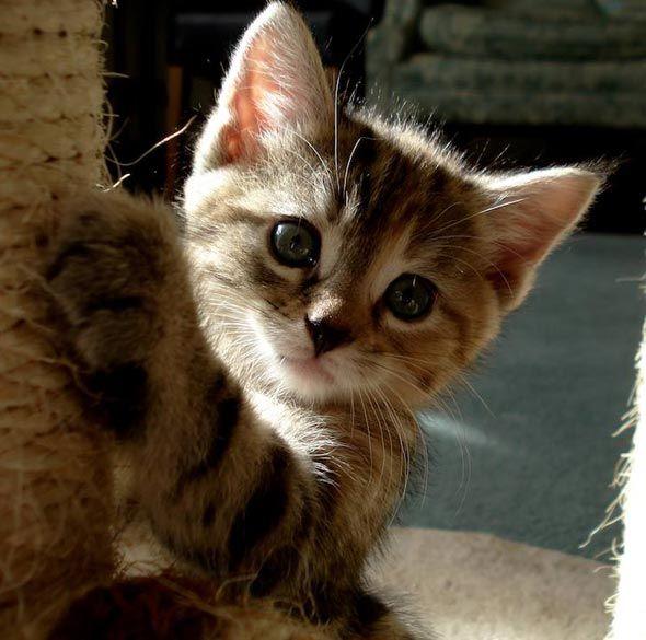 Tibi S Second Litter Redux Kitten Kitten Animals Kittens