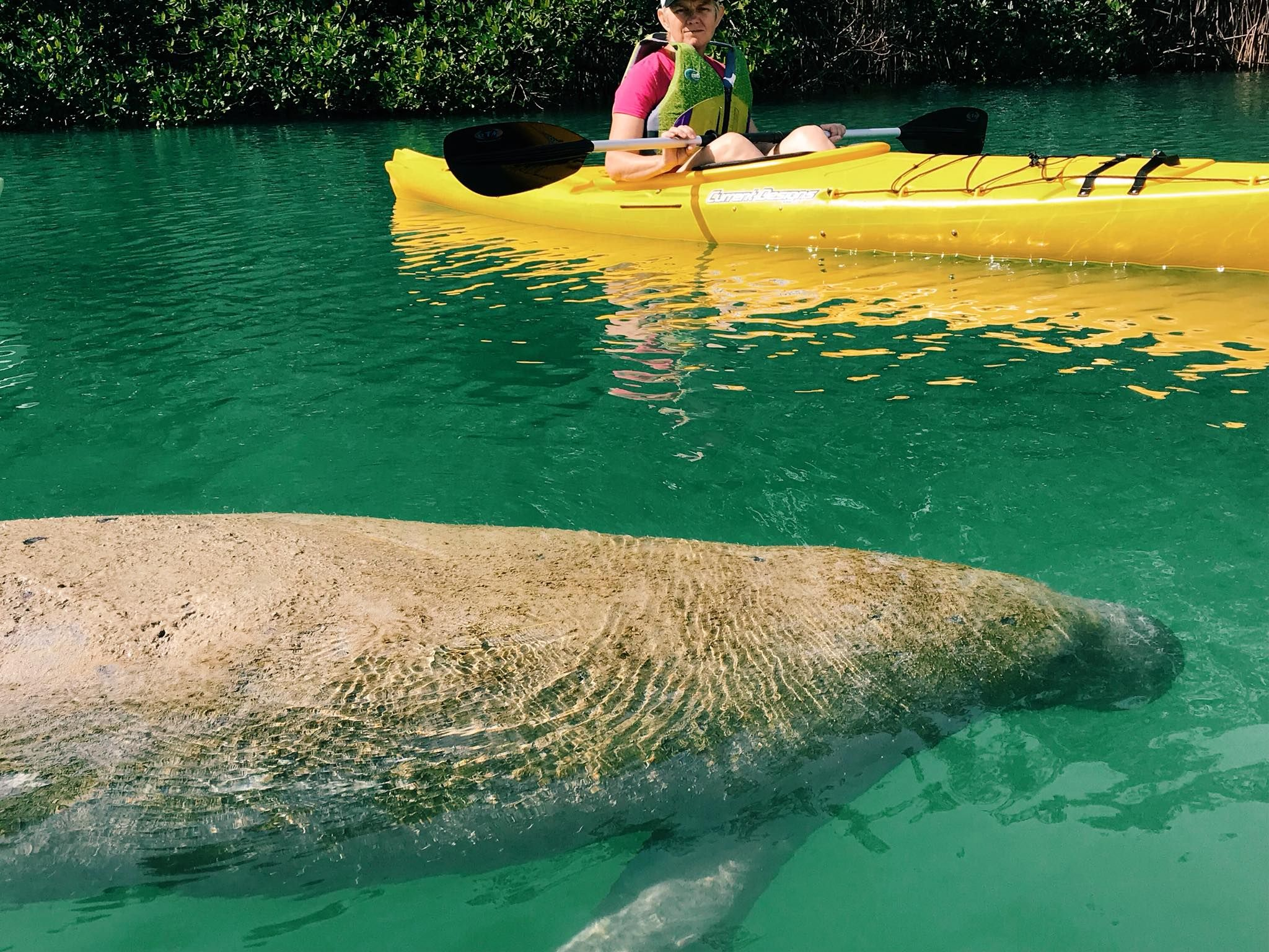 Best kayak paddleboard and bike rentals and tours in miami
